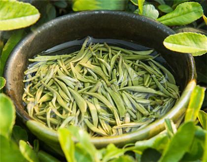 竹叶青茶叶的功效是什么